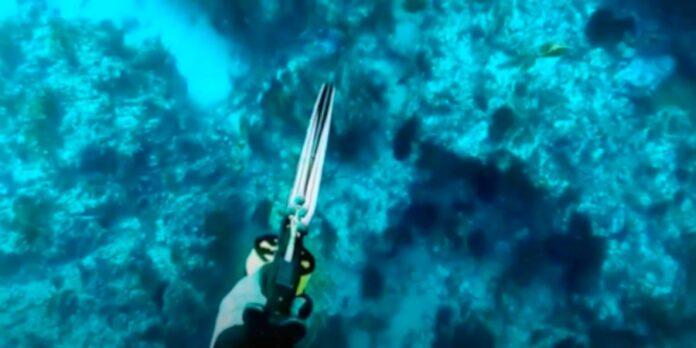 fucile da pesca sub acquea